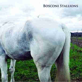 Bosconi Stallions Compilation: Celebrating 5 Years Of Bosconi Records